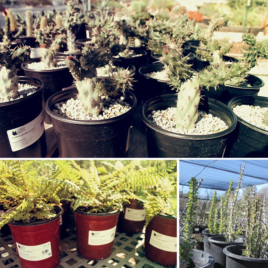 Rancho-Santa-Ana-Botanical-Gardens-Walk-12