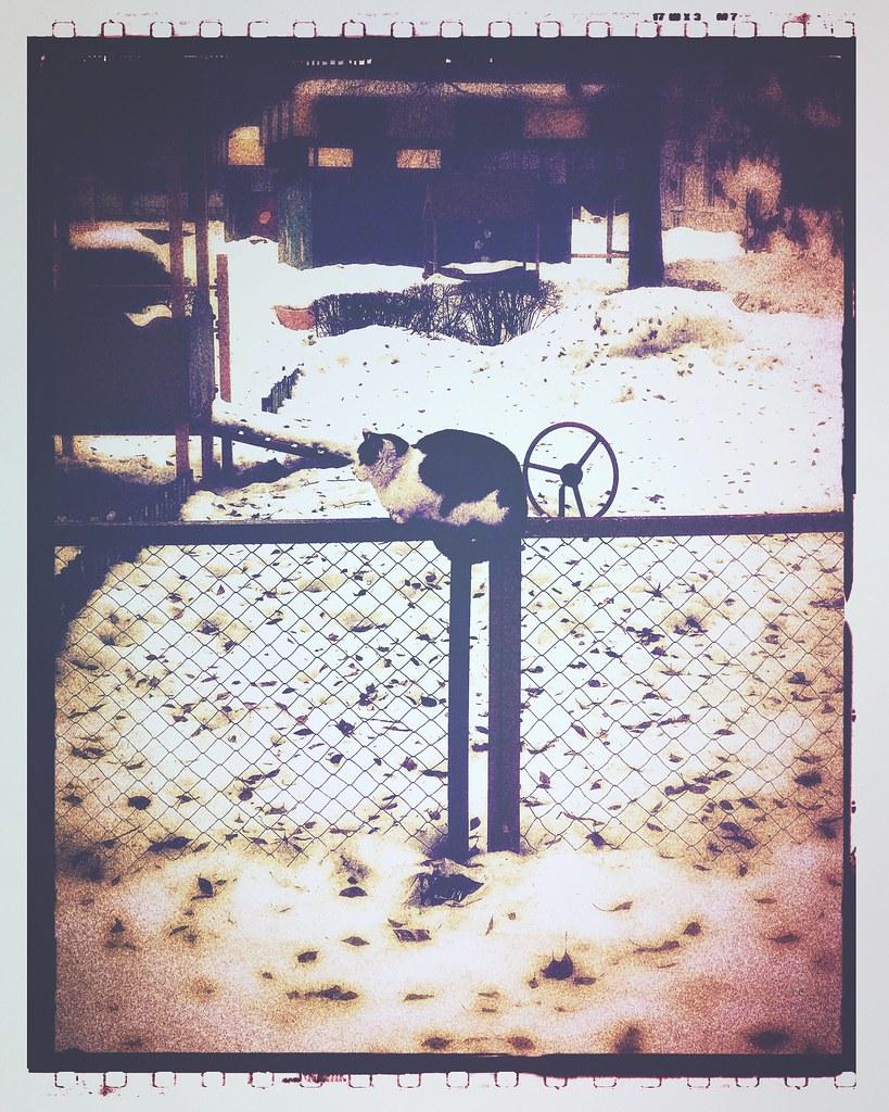 ***winter cat***🐈❄️