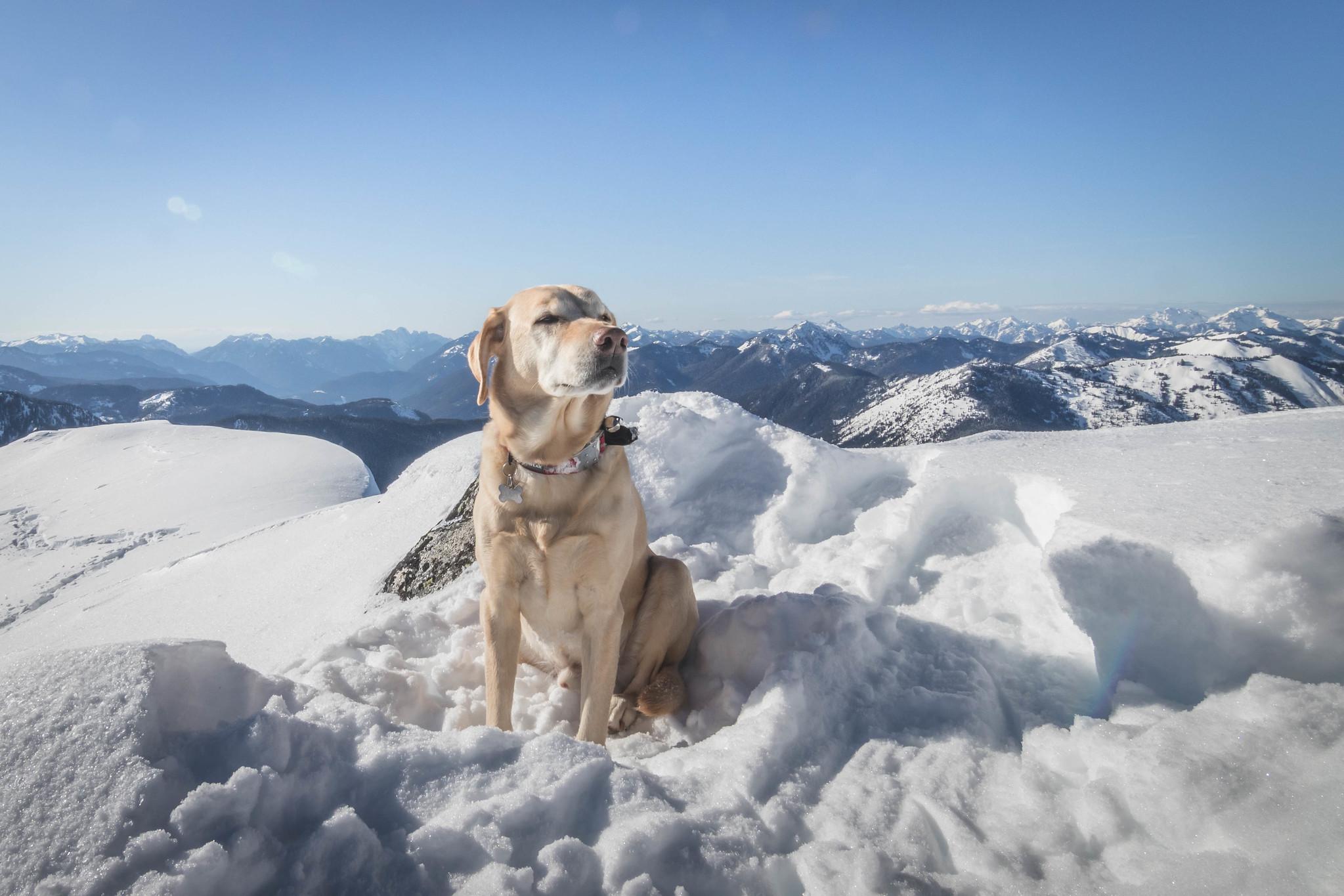 Summit dogs on K9 Peak