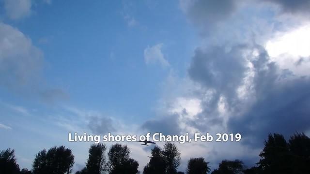 Living shores of Changi, Feb 2019
