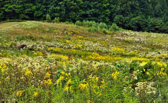 The Butterflies Dance Amongst the Flowers Inviting Me to Take in the Mysteries of Nature (Cuyahoga Valley National Park)