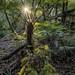 Tree-Fern Sunrise Sparkle by Panorama Paul