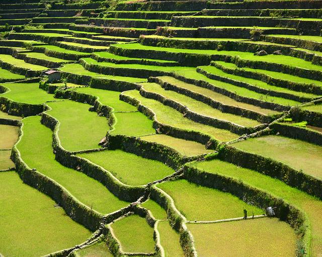 Terrazas de arroz de Batad en Filipinas