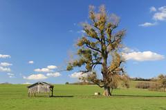 Auprès de mon arbre - nearby my tree