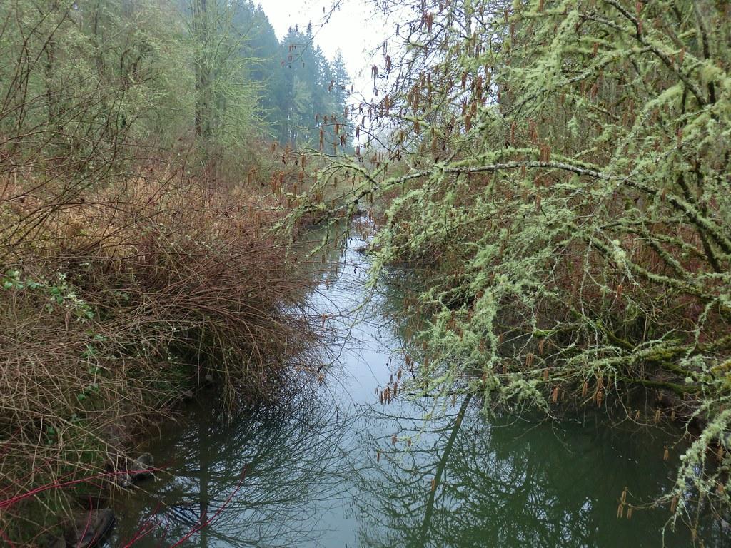 Beaverton Creek