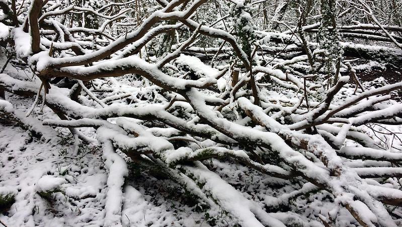 Bearacleave Wood