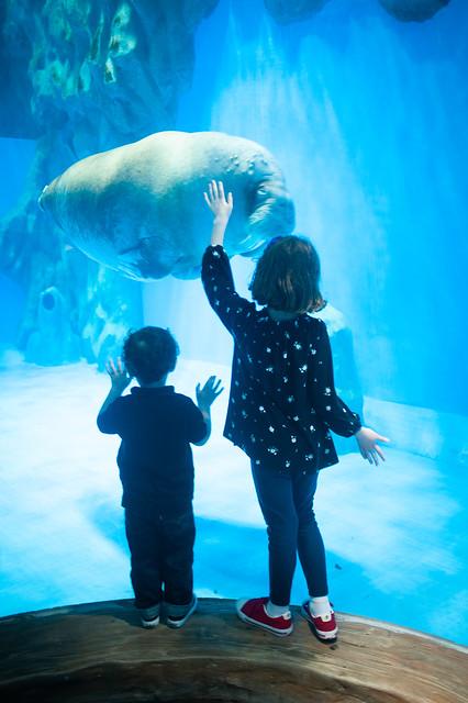 Hong Kong Ocean Park Walrus