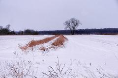 Winter All
