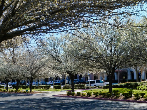 2019-03-14 - Nature Photography - Flowers - Trees in Bloom
