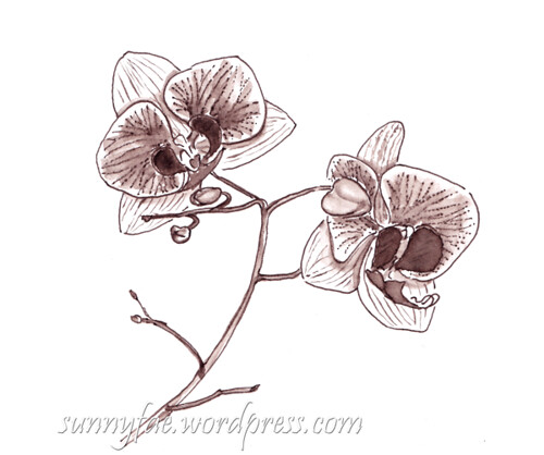 drawing of a pink orchid in brown ink