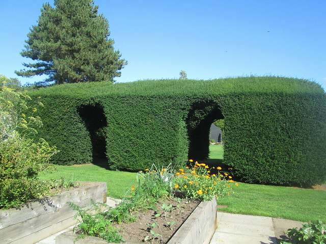 yew hedge arch