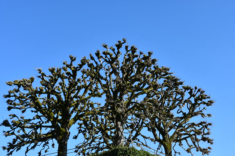 Tree 23.02 (1)