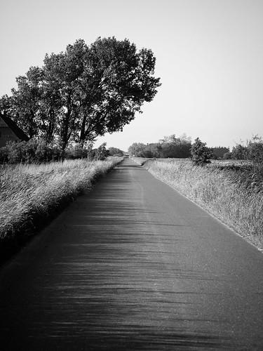 ausflug baum blackandwhite einfarbig fluss landscape landschaft pflanze schwarzweis strase menschenleer simonsberg schleswigholstein deutschland