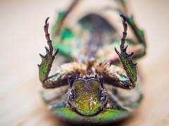 Macro of a dead beetle on the floor