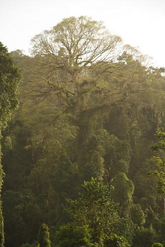 africa centralafrica sãotoméeprincipe saotomeprincipe sãotoméprincipe saotome obo trees rainforests forests africanlandscapes