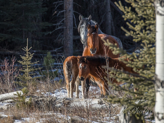 Wild Horses Explore 21/01/19, Canon EOS 6D MARK II, Canon EF 100-400mm f/4.5-5.6L IS II USM