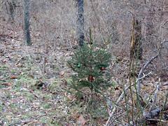 Christmas along the path