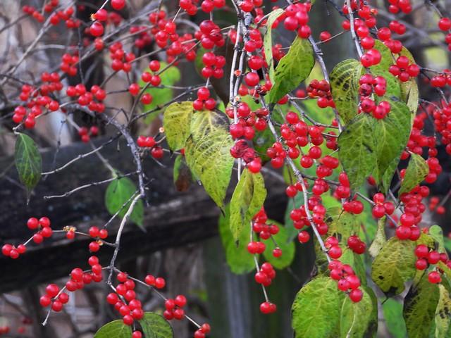 4033ex  red & green  **Explore**