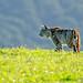 Bobcat #18 by lennycarl08