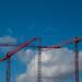 50/365 dancing cranes