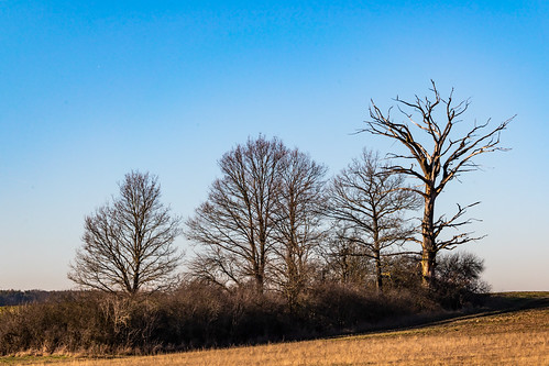 Trees in the field 2560