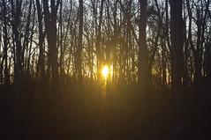 Soleil couchant à travers les arbres