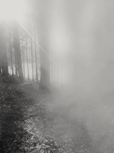 Seltsam, im Nebel zu wandern ...
