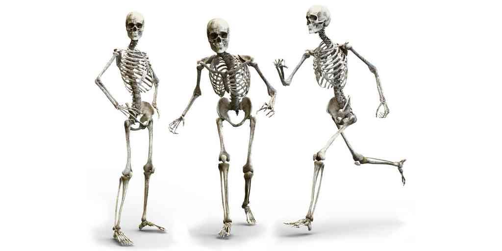 Les Néandertaliens marchaient comme les humains modernes