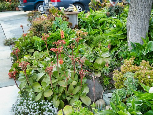 2019-03-19 - Nature Photography - Plants - Frontyards