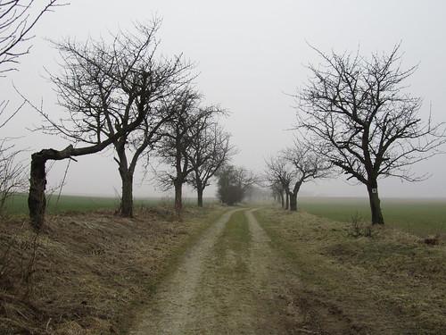 20110316 0203 094 Jakobus Weg Feld Allee Bäume