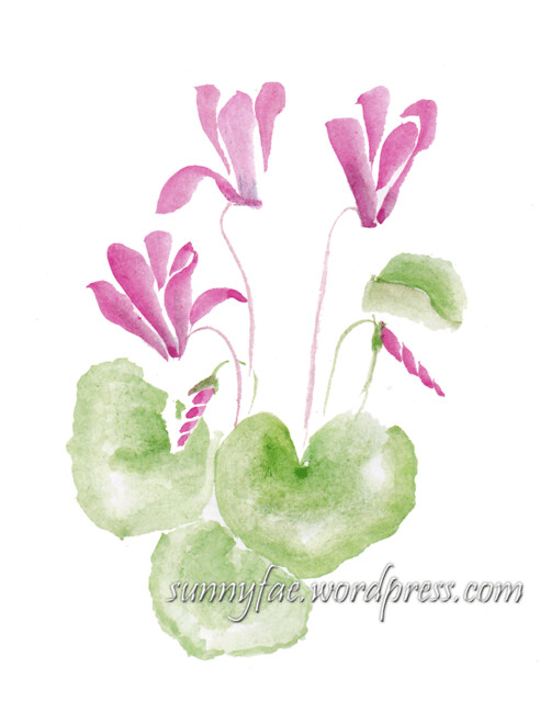 watercolour sketch of a cyclamen 2