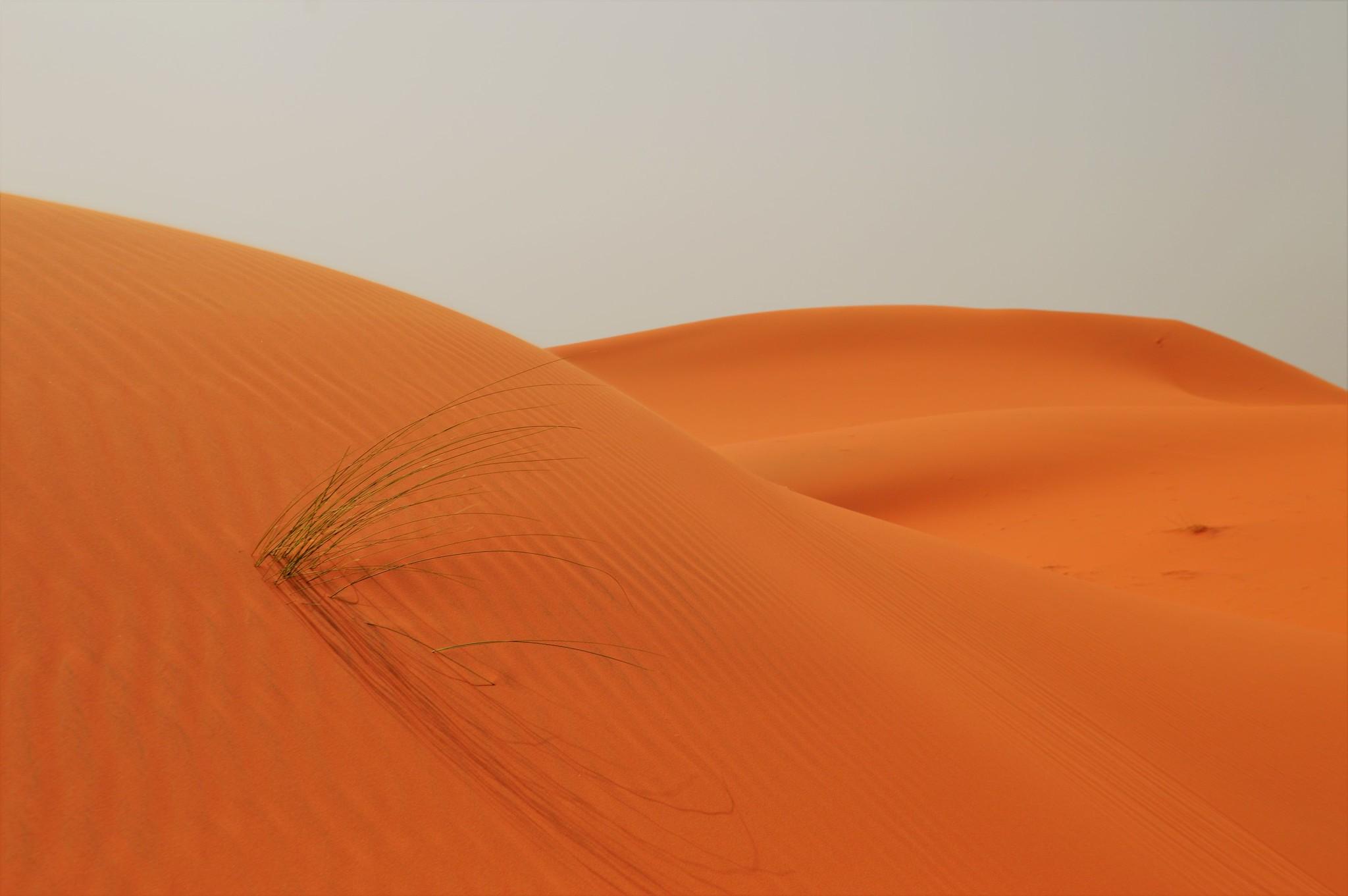 Avantura: Maroko 2019