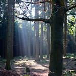 Tilgate Forest - West Sussex