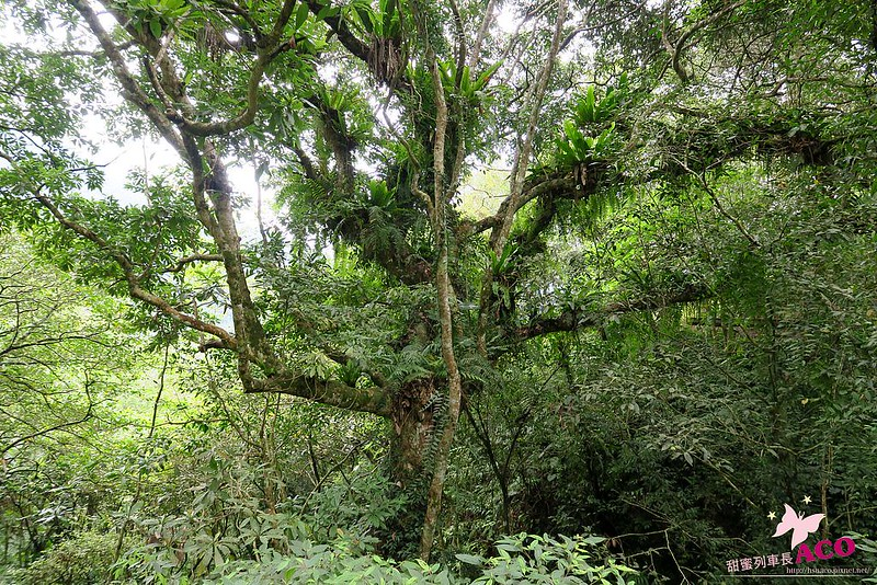 延伸島嶼生命綠 花蓮護樹IMG_5263
