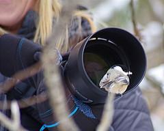 Black-Capped Chickadee with Trish