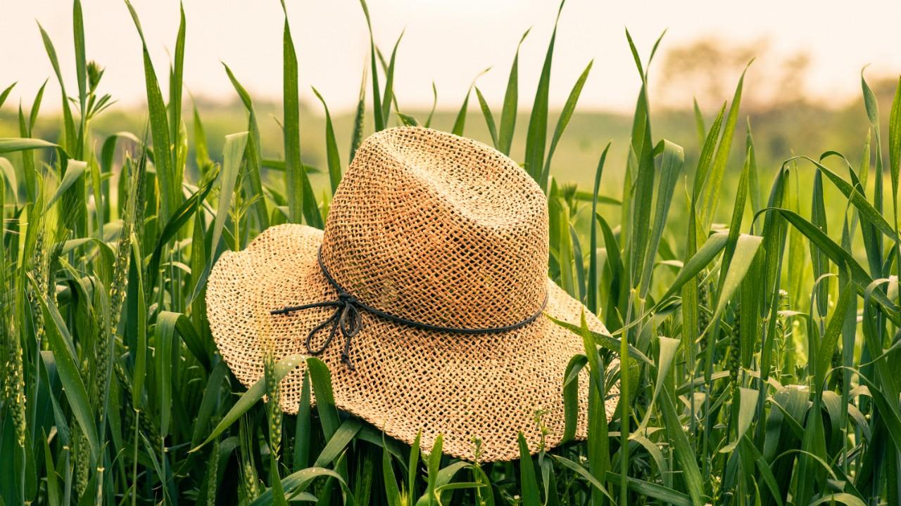 A hat in a field
