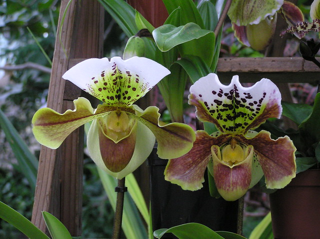 Annual Orchid Show in Tallinn Botanic Gardens