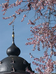Kirschblüte im Schlossgarten