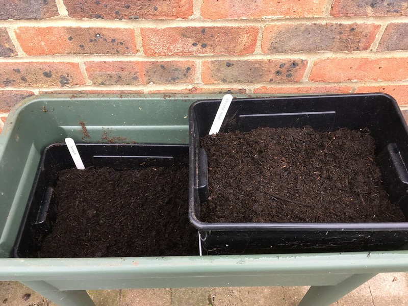 Spinach and pak choi seeds in the cold frame