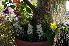 2019 Orchid Show-56