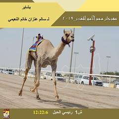 صور سباق الحيل والزمول (الأشواط العامة) مهرجان سمو الأمير المفدى مساء 8-4-2019