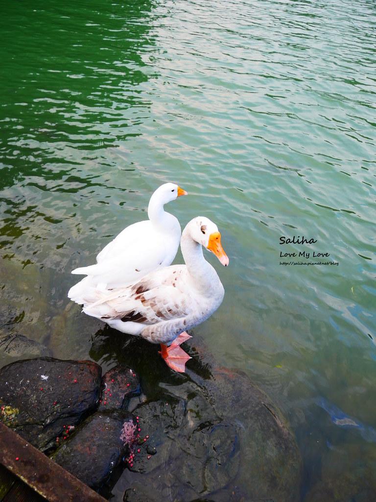 宜蘭三星兩天一夜一日遊景點推薦長埤湖清水地熱谷附近景點 (2)
