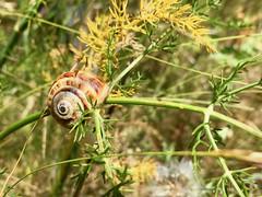 2018.06.20 - snails
