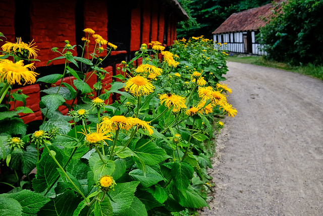 Flowers at the Farm in Denmark