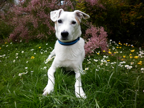 -archie-in-the-garden_9075481023_o
