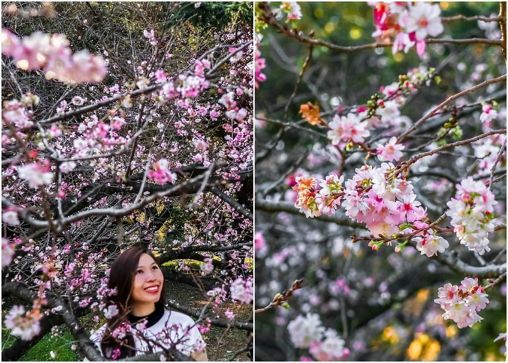 tokyo-shinjuku-gyoen-park-garden-alexisjetsets