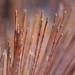 Sik Sik Yuen Incense