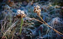 gel en poudre - Photo of Graincourt-lès-Havrincourt