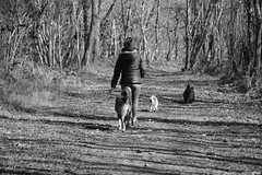 Pomenons nous dans les bois - Photo of Le Douhet