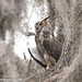 Great Horned Owl in his man cave by jimgrayimages.com